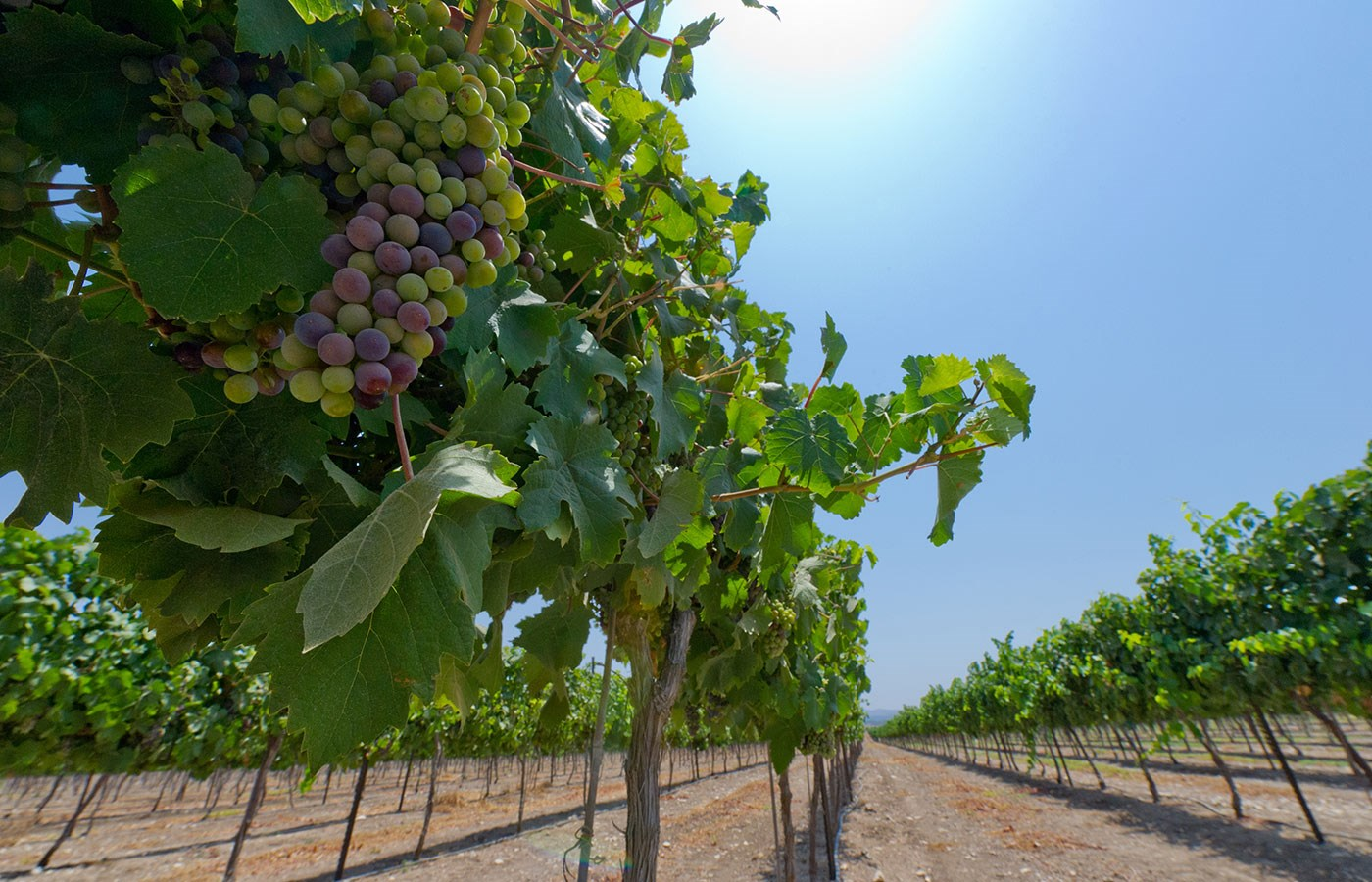 Explore wines from Israel - Taste history!